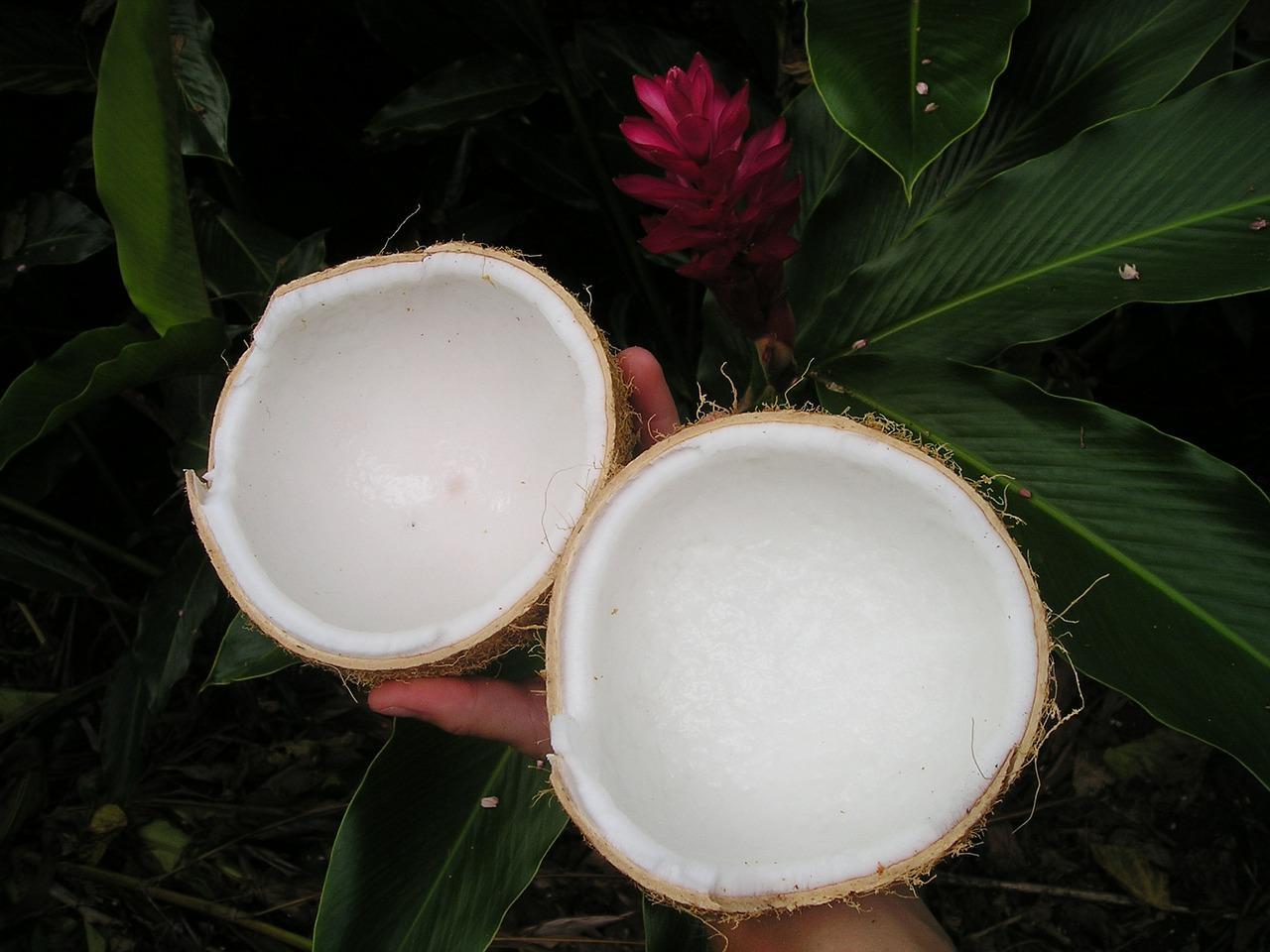jajanan berbahan dasar kelapa